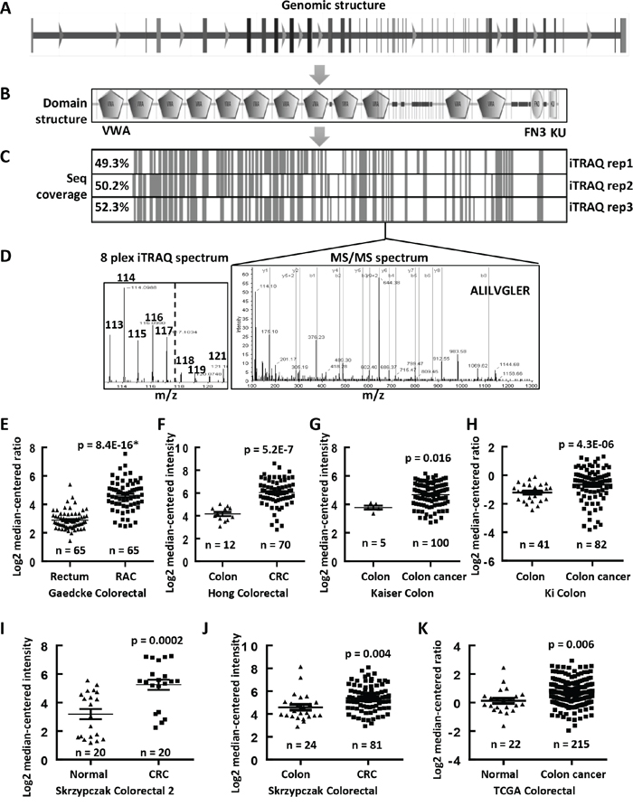 Upregulated mRNA expression levels of COL6A3 in colon cancers revealed by MS and Oncomine analyses.