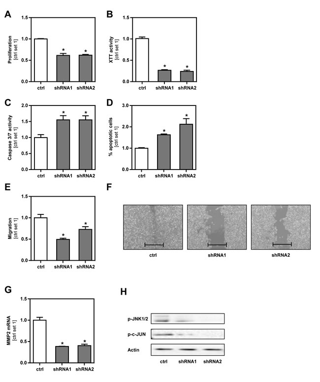 Effect of GLUT1 inhibition on B16 melanoma cells