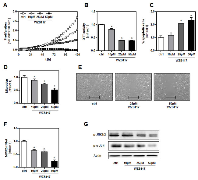 Effect of a chemical GLUT1 inhibition on human melanoma cells