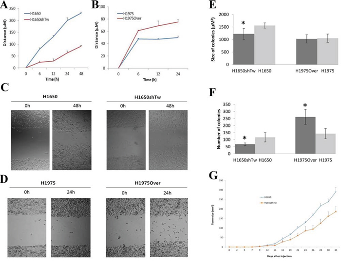 Effects of Twist1 on scratch and colony assays and in vivo xenograft tumor growth.