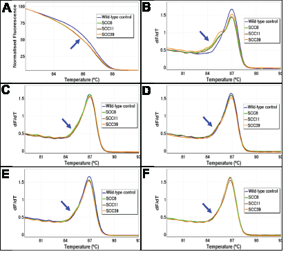 The melting profiles of FFPE DNA before and after UDG treatment.