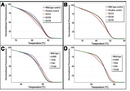 UDG treatment reduces artefactual false positives by HRM.