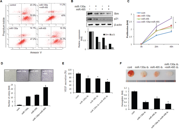 miR-130a and miR-495 increases cell proliferation and tumor angiogenesis.