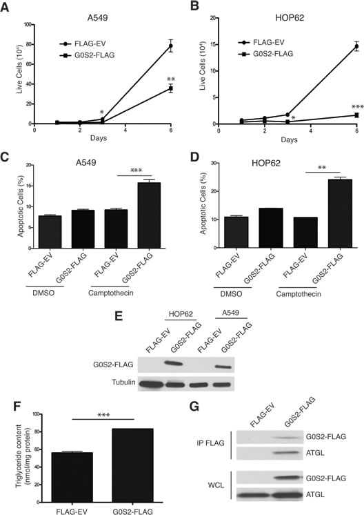 Ectopic expression of G0S2 results in elevated cellular TG levels and inhibits the growth, survival and motility of cancer cells.