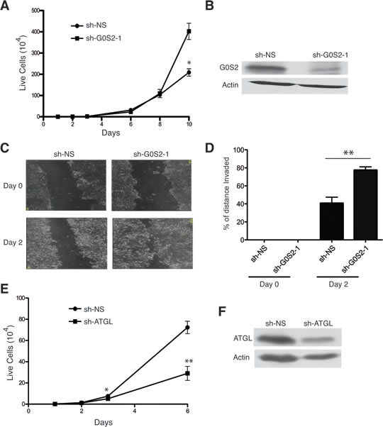 Knockdown of G0S2 enhances cell growth and motility in colorectal cancer cells.