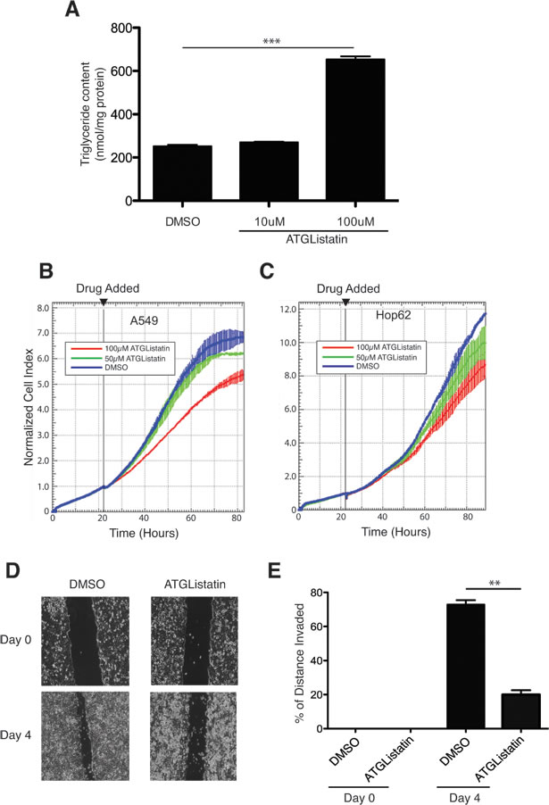 A chemical inhibitor of ATGL, Atglistatin, suppresses the growth of cancer cells.