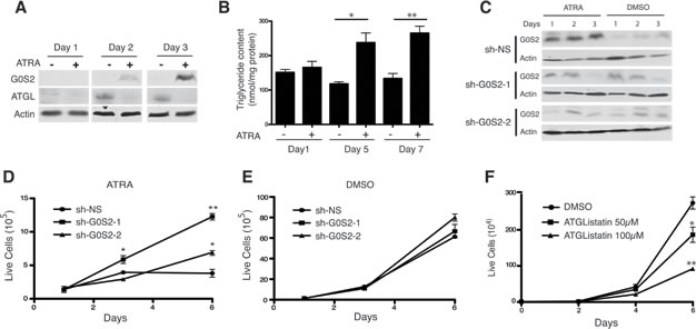 ATRA-mediated growth arrest depends on upregulating G0S2 in NB4 cells.