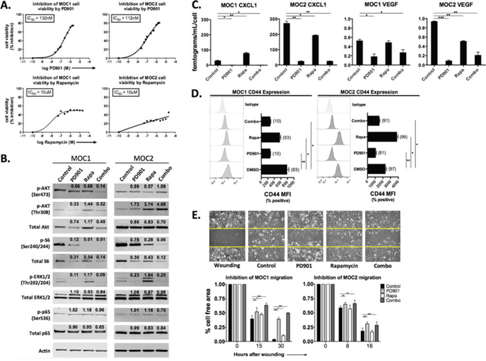 In vitro characterization of the effects of MEK and mTOR inhibition on MOC1 and 2 cells.
