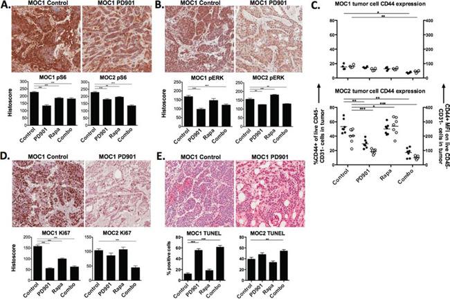 In vivo on-target effects of MEK and mTOR inhibition in MOC tumors.