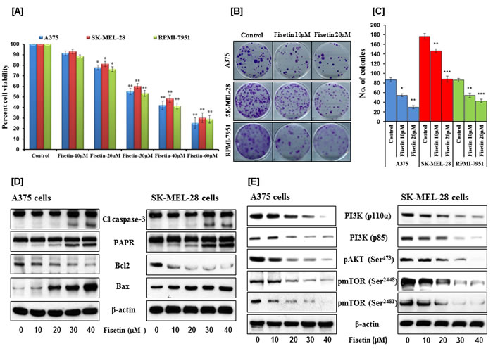 Effects of fisetin on cell viability, colony formation, apoptosis and on modulation of PI3K signaling pathway in BRAF-mutated melanoma cells.