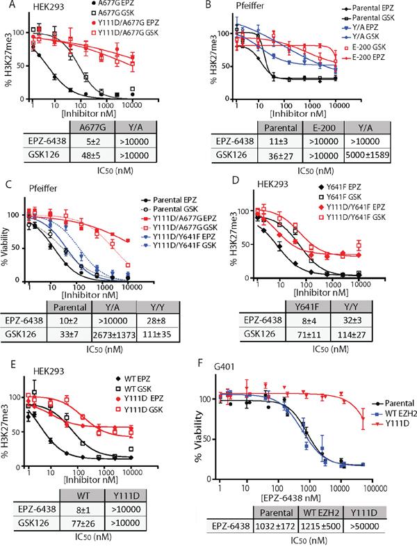 A single EZH2 D1 domain mutation confers resistance to EZH2i.