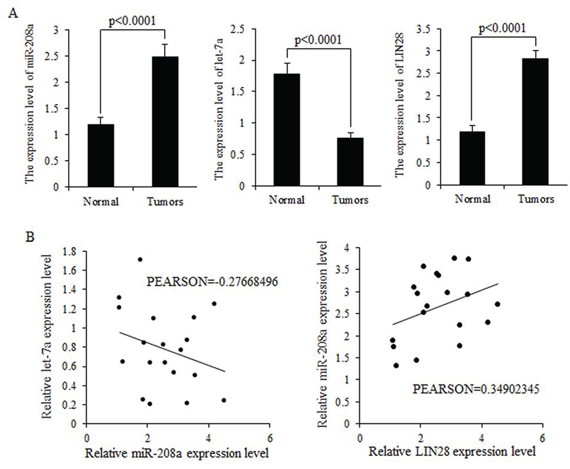 Expression levels of miR-208a and LIN28 mRNA are inversely correlated with that of let-7a in tumors.