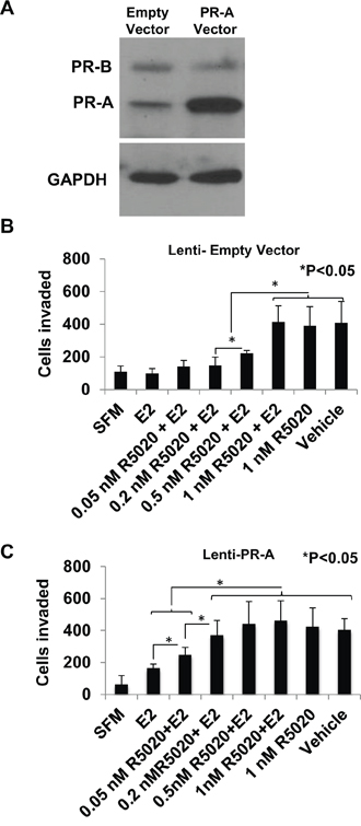 Effect of overexpressing of PR-A on the progestin dose response for rescue of invasiveness from estrogen regulation.