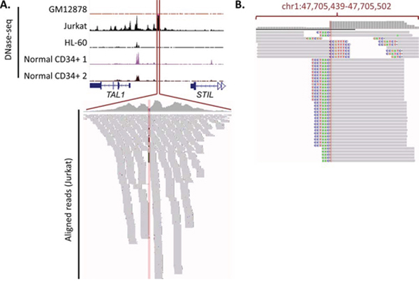 Gain of TAL1 enhancer mutation, along with DNase-seq data and sequencing reads.