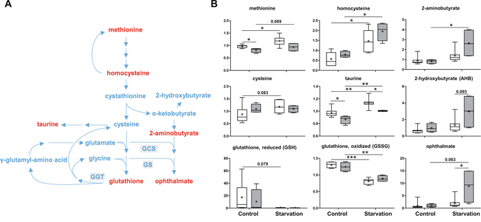 Methionine metabolism and glutathione synthesis.
