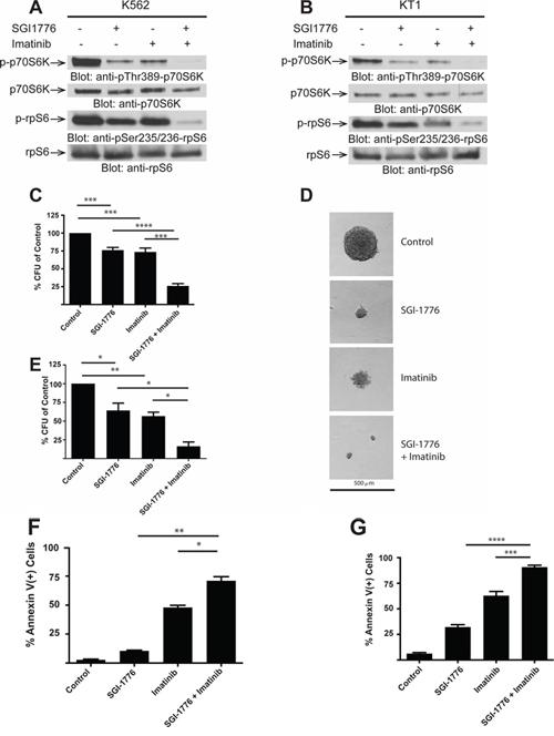 SGI-1776 enhances the suppressive effects of imatinib mesylate on BCR-ABL expressing cells.