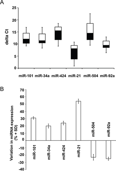 miRNA validation in NB human biopsies.