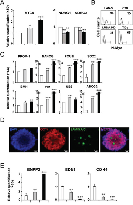 LMNA–KD sphere-derived adherent cells possess self-renewal and tumor progression characteristics.