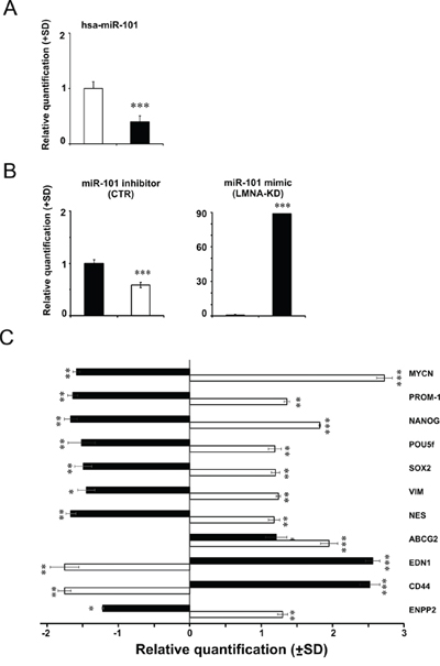 Modulation of hsa-miR-101 modifies the expression of MYCN gene and in turn of stemness and cancer-related genes.