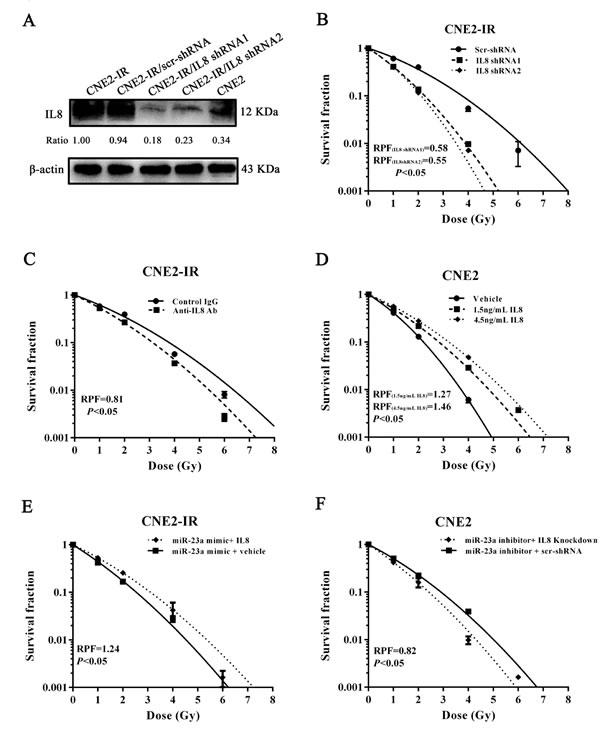 MiR-23a increases NPC cell radiosensitivity through targeting IL-8.