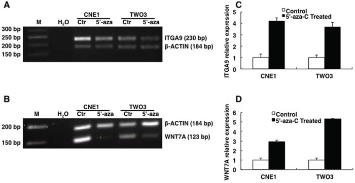 ITGA9 and WNT7A are restored by demethylation reagent 5′-aza-C in NPC cell lines.