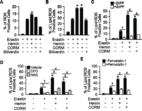 Hemin and CORM accelerate the accumulation of lipid peroxidation in the presence of Erastin.