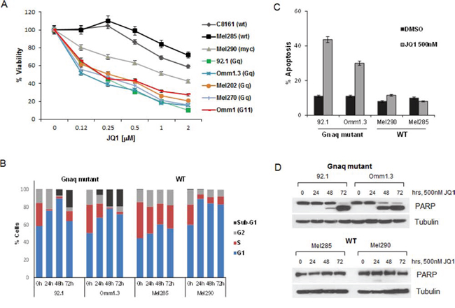 JQ1 induces cell cycle arrest and apoptosis in UM cells.