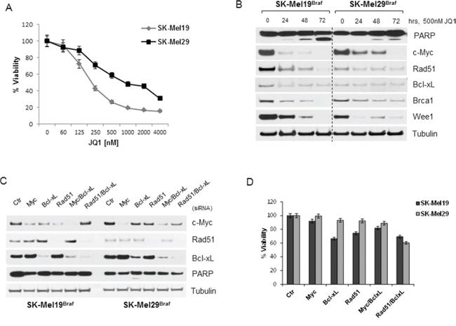 BRAF mutant melanoma cells are sensitive to JQ1 through other mechanisms.