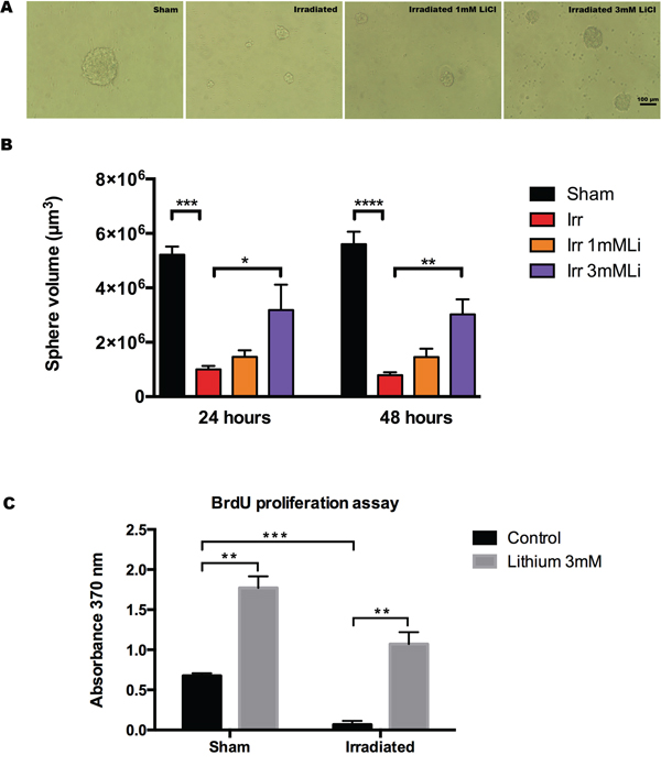 Lithium at 3 mM protects neurosphere proliferation after irradiation.