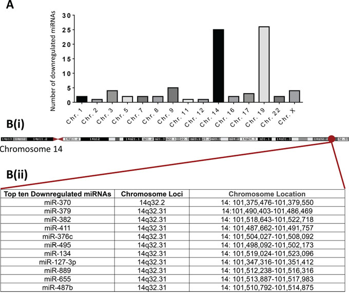 Chromosomal locations of the miRNAs commonly down-regulated in both Hs578Ts(i)8 cells and Hs578Ts(i)8 EVs.