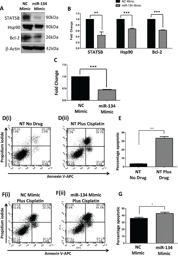 Effects of directly over-expressing miR-134 in Hs578Ts(i)8 cells.