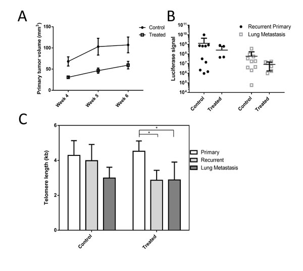 Perifosine reduces primary tumor size and may inhibit telomere maintenance in a xenograft model.