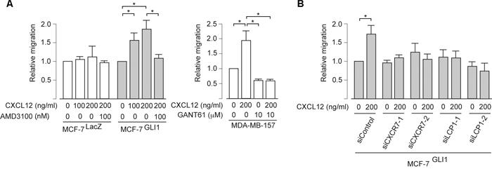 GLI1 enhances the CXCL12-induced migration through CXCR4, CXCR7 and LCP1.