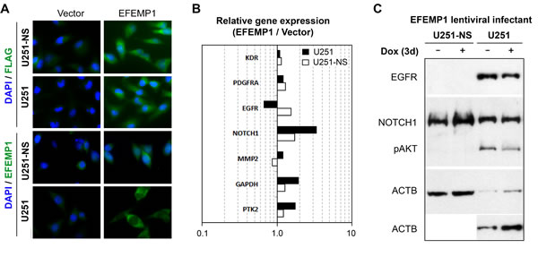 Cell context-dependent regulation of gene expressions by EFEMP1.