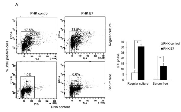 HPV E7 expressing cells entry into S phase under serum starvation and elevated levels of p27.