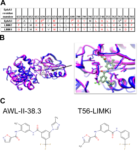 Bioinformatical analysis of EphA3 kinase and LIMK2 comparison A Binding site conservation between LIMK2 and EphA3 kinase.