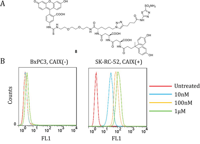 Dual-motif CAIX-targeting small molecule labeled with FITC 8 binds to CAIX-expressing SK-RC-52 cells.