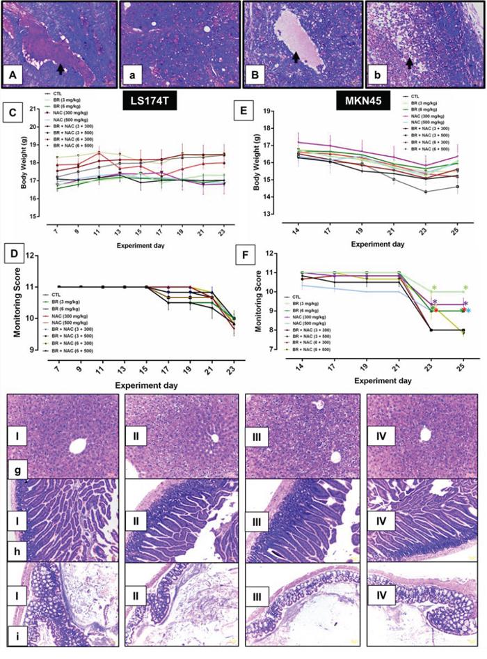 Animal toxicology studies and representative photos of Periodic Acid-Schiff's (PAS) staining of mucin pools.