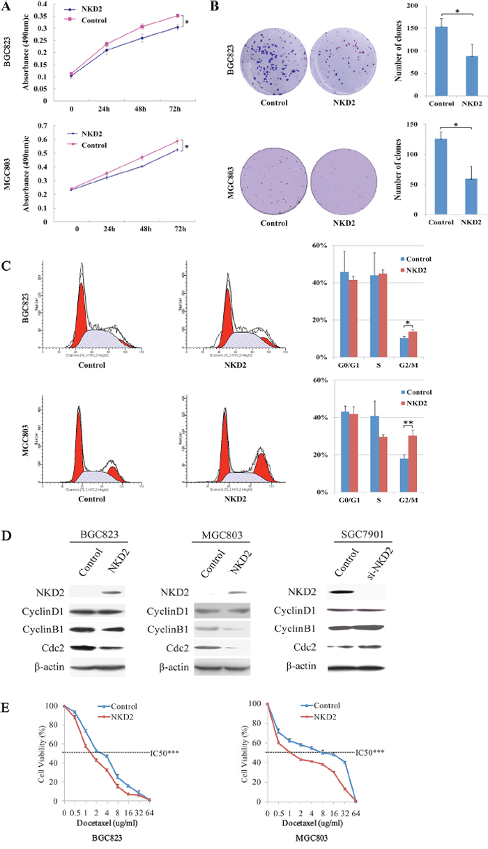 NKD2 induced G2/M phase arrest and sensitized BGC823 and MGC803 cells to docetaxel.