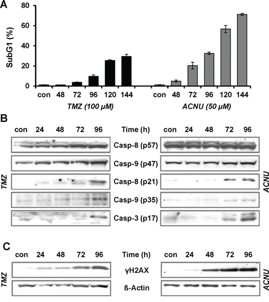TMZ- and ACNU-induced apoptosis and DNA damage.