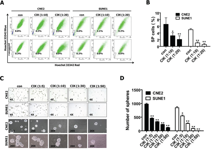 CIK cells were active against stem-like cancer cells of NPC.