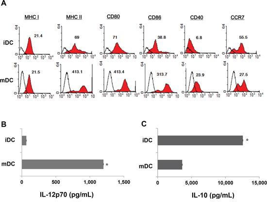 Characteristics of bone-marrow-derived CD11c+ dendritic cells (DC).