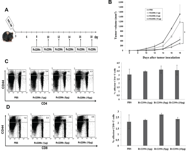 Rv2299c injection results in enhanced anti-tumor activity against MC-38 colon cancer.