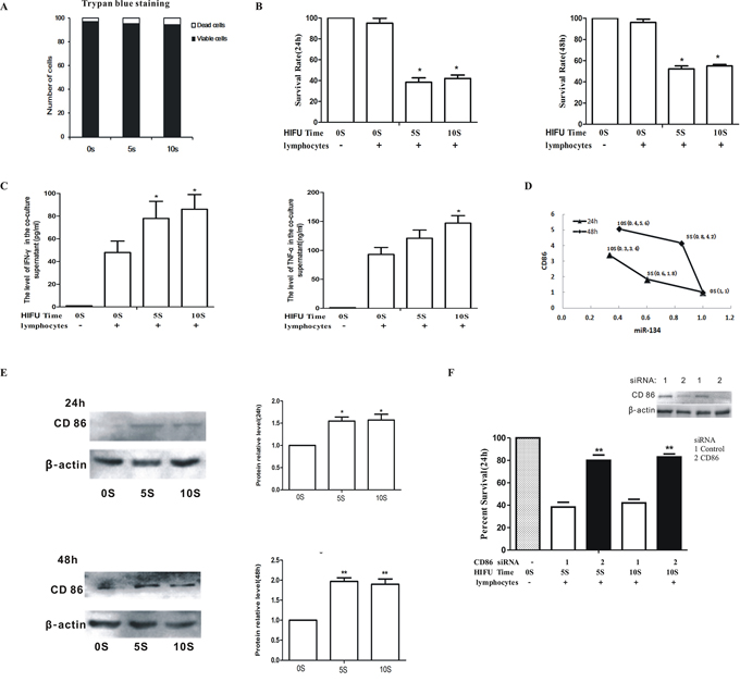 HIFU promoted anti-tumor immunity of splenic lymphocytes by down-regulating miR-134 level and increasing CD86 expression in B16F10 cells.