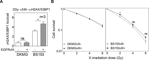 Impact of EGFRvIII expression on DSB repair capacity and cellular radiosensitivity.