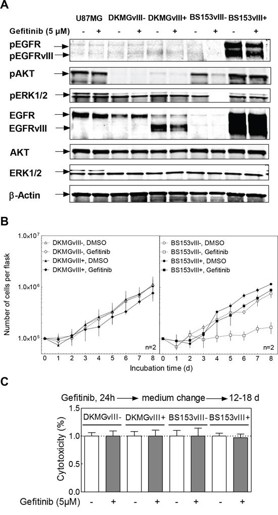 Effect of gefitinib on EGFR signaling, proliferation and clonogenicity.
