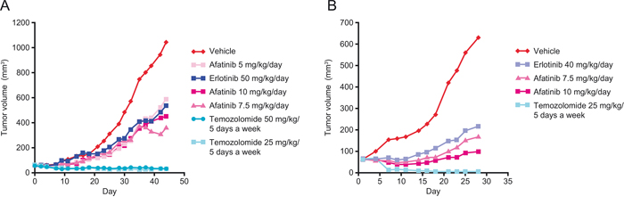 Effect of afatinib, erlotinib and temozolomide in two different human patient-derived xenograft models of glioblastoma.