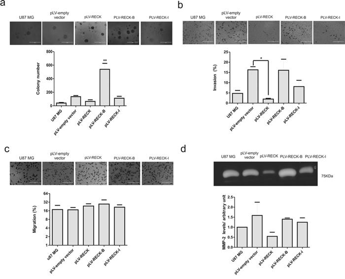 RECK variants functional analysis in U87 MG cells.