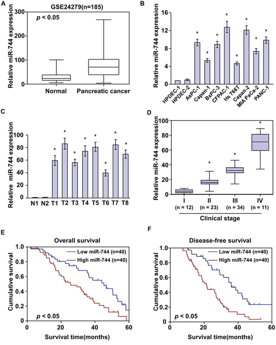 MiR-744 overexpression positively correlates with pancreatic cancer progression.
