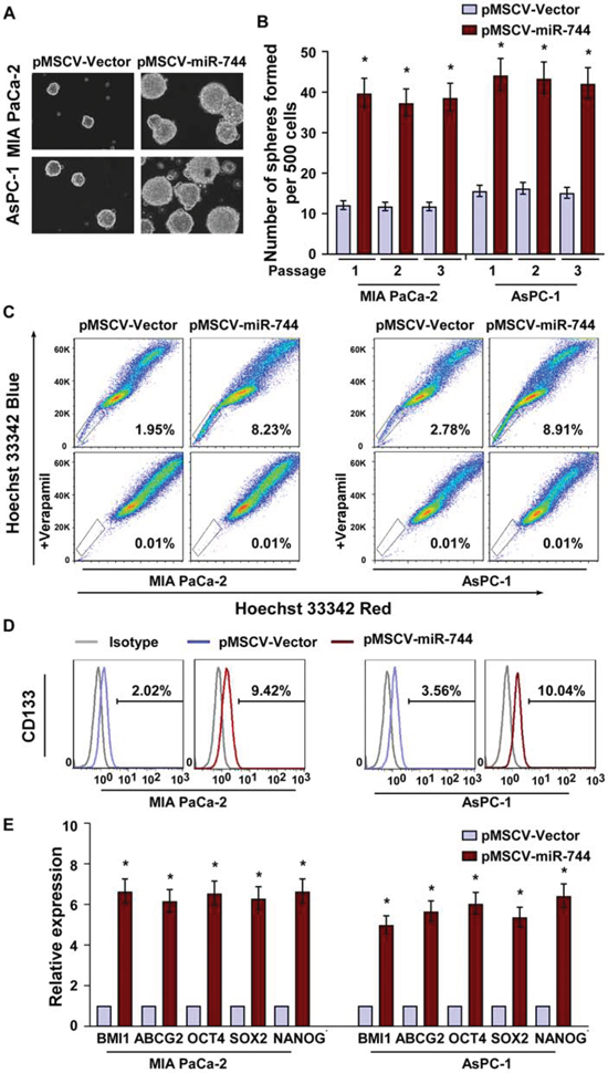 MiR-744 overexpression promotes pancreatic cancer stem cell-like traits.
